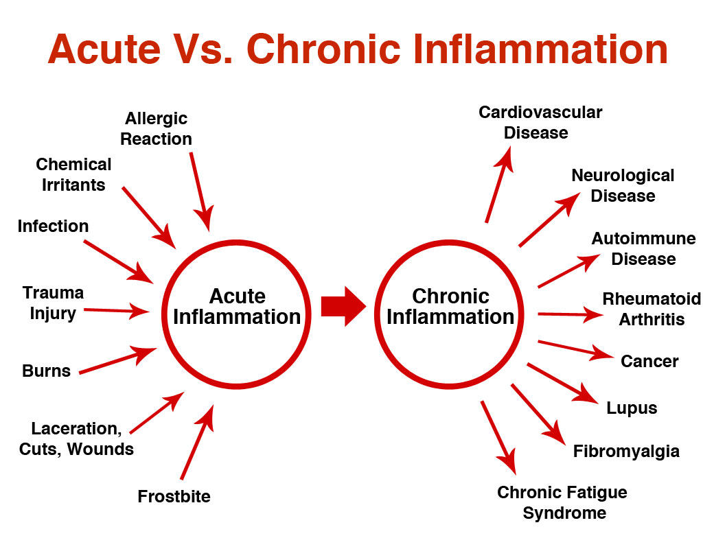 acute vs. chronic inflammation